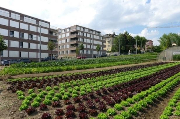 """""""Dans la foulée du travail réalisé et pour donner corps aux intentions affichées, il serait nécessaire de travailler sur un schéma de développement de l'agriculture périurbaine."""""""