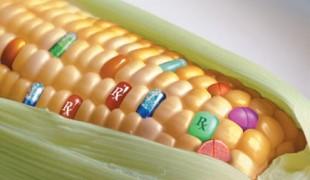 JAO-OGM-Senat