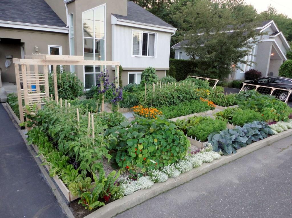 Moins de gazon plus de légumes