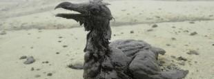 oiseau-englue-petrole-deverse-large